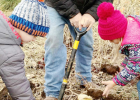 Maverick Jonas and Hadley Linn help pick up the potatoes that Kent Bearnes is digging up.